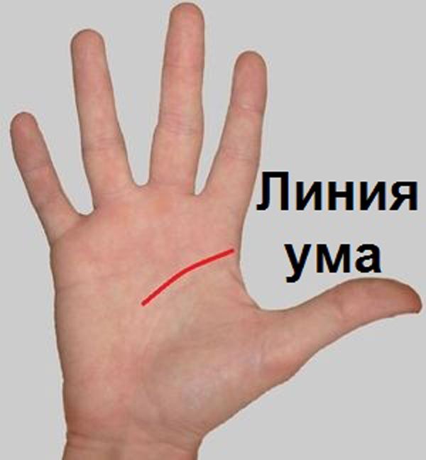 1. Если линия ума короткая, то Вы делаете упор на физический труд и достижения, нежели на умств