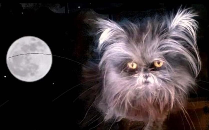 Кошка по имени Муни, болеющая гипертрихозом, который также называют синдромом оборотня. Гипертрихоз,