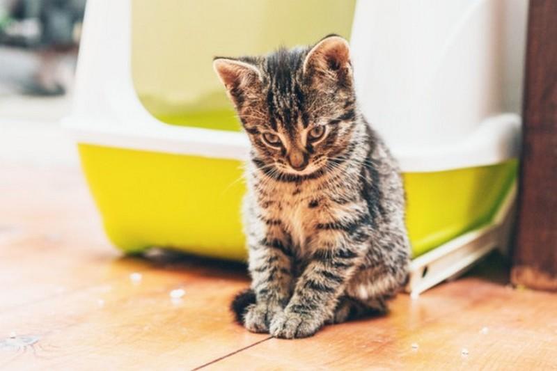 7. Кошки У каждого любителя кошек имеется в доме кошачий туалет, в котором зачастую используется бен
