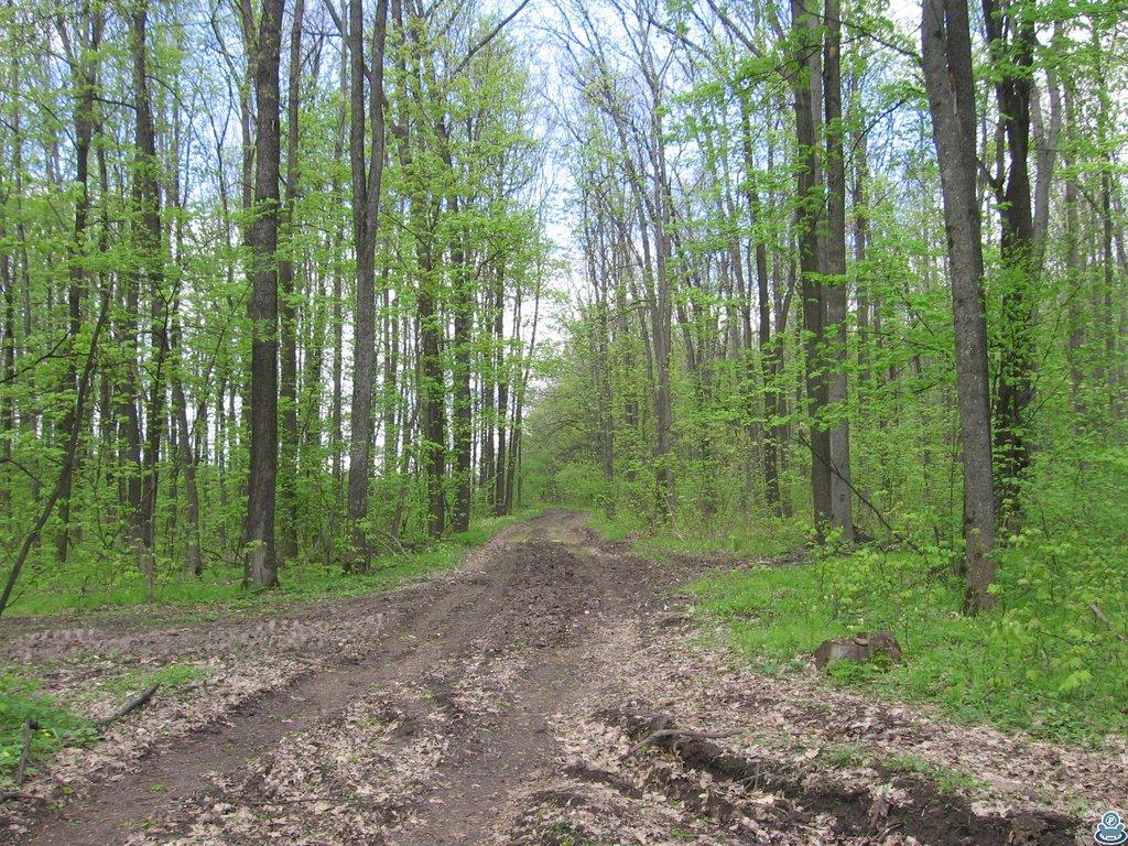 Перекресток в лесу