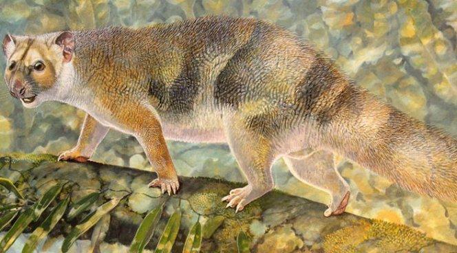 Палеонтологи обнаружили вАвстралии останки останки сумчатого льва размером скрысу