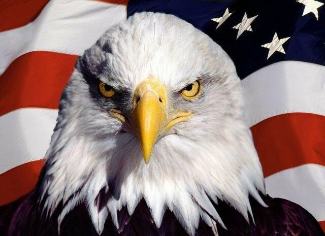 Картинки по запросу Белоголовый орлан - национальная эмблема США