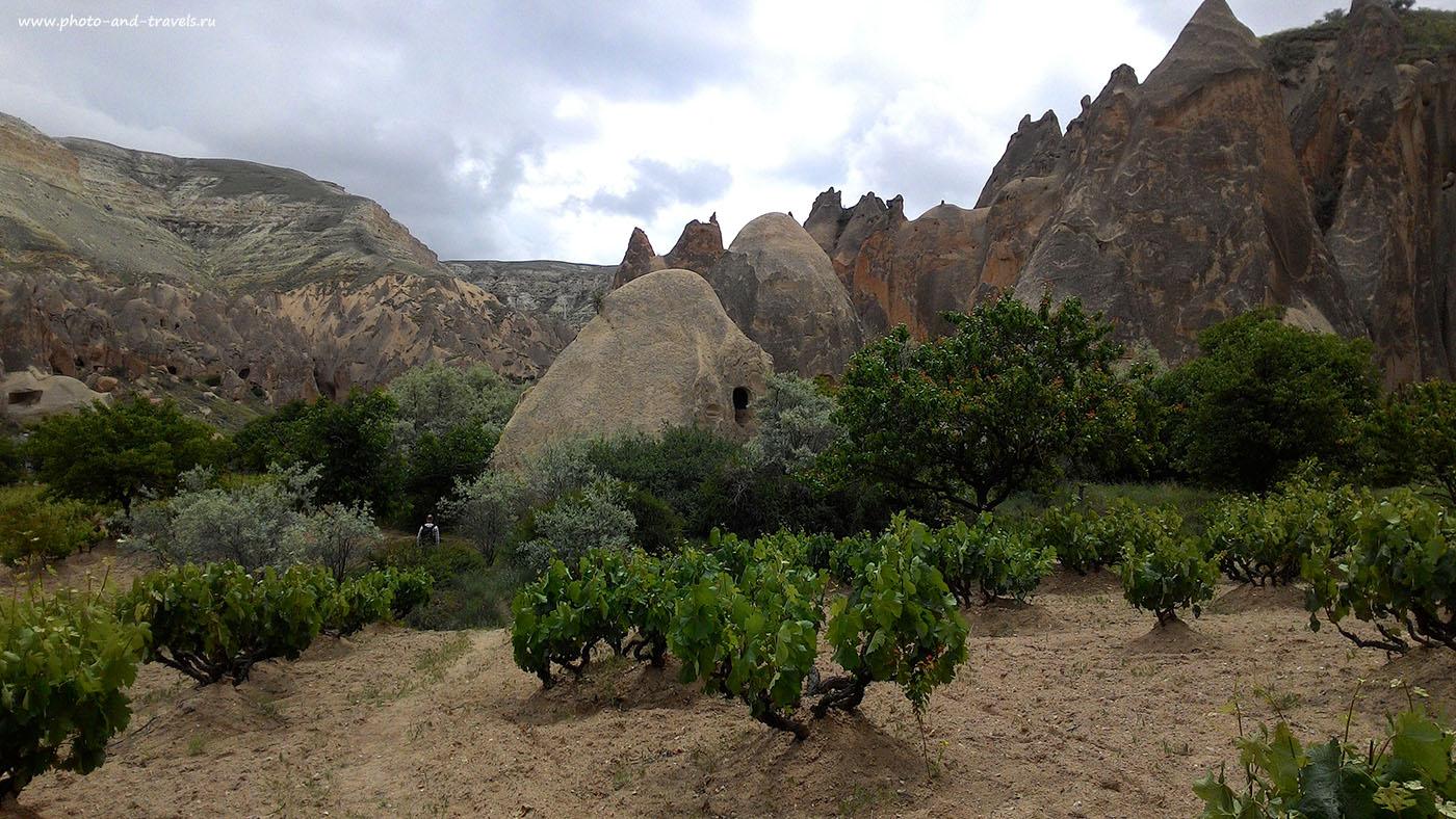 Фото 9. Виноградники в районе долины Зельве (Zelve Valley). Отчет о самостоятельном путешествии по Турции в мае. Снято на смартфон.