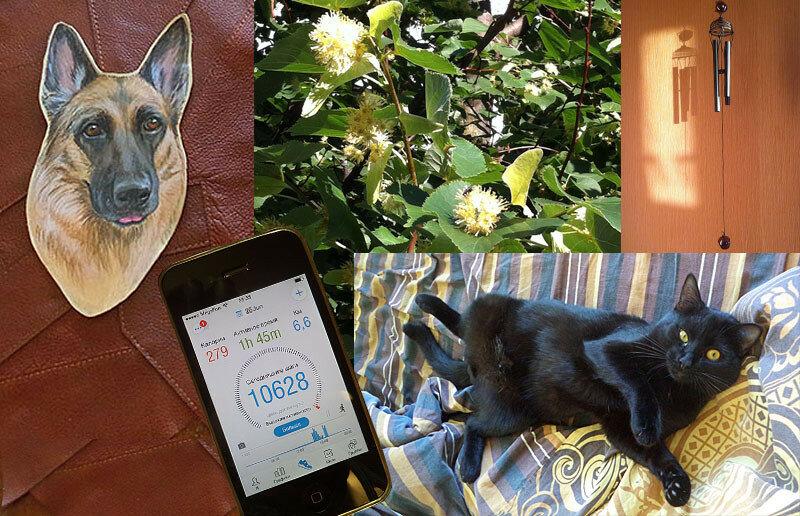 Один день художника про собак и кошек
