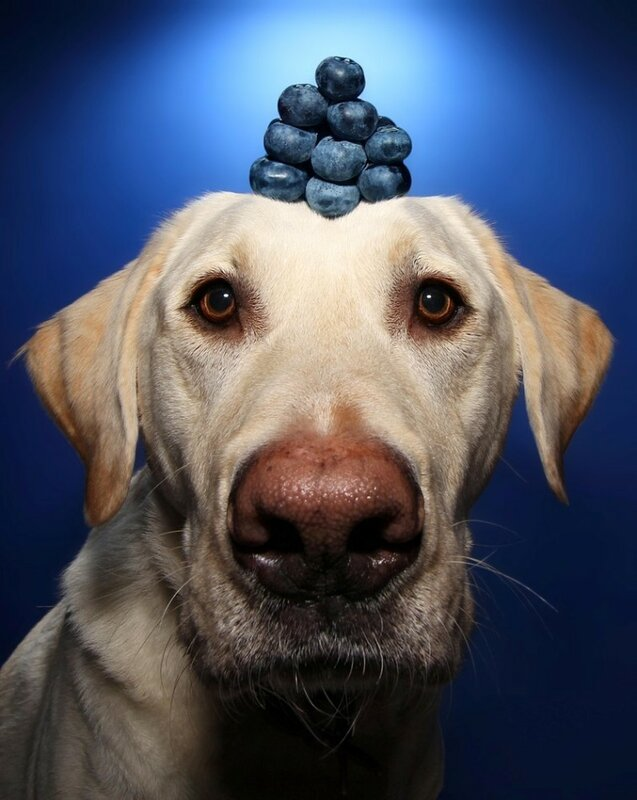 собака и фрукты