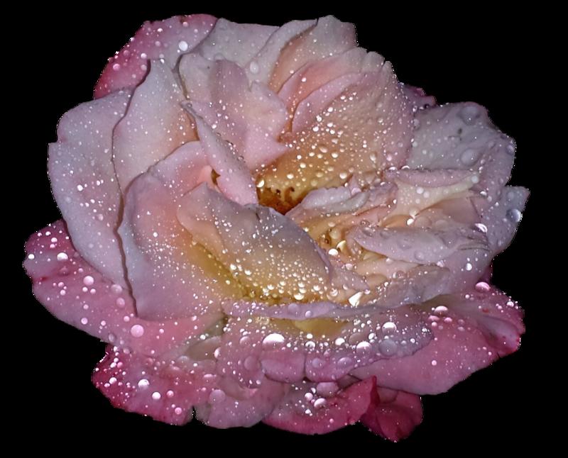 блестящая роза картинки анимация