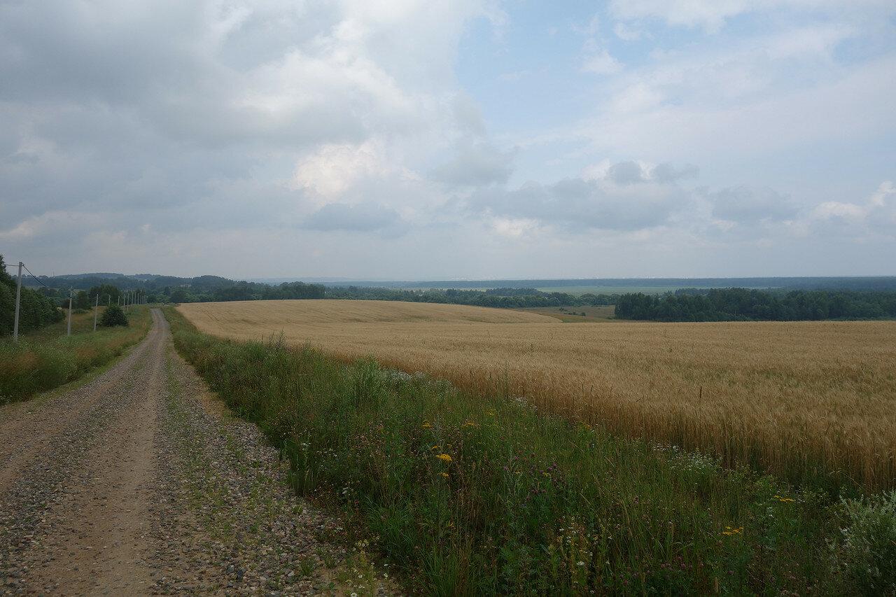 ярославские поля-леса