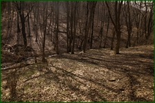 http://img-fotki.yandex.ru/get/133483/15842935.45a/0_f51a0_2c952e14_orig.jpg