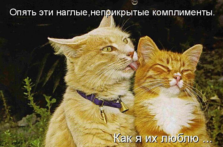 Фото Прикольных Животных с Надписью