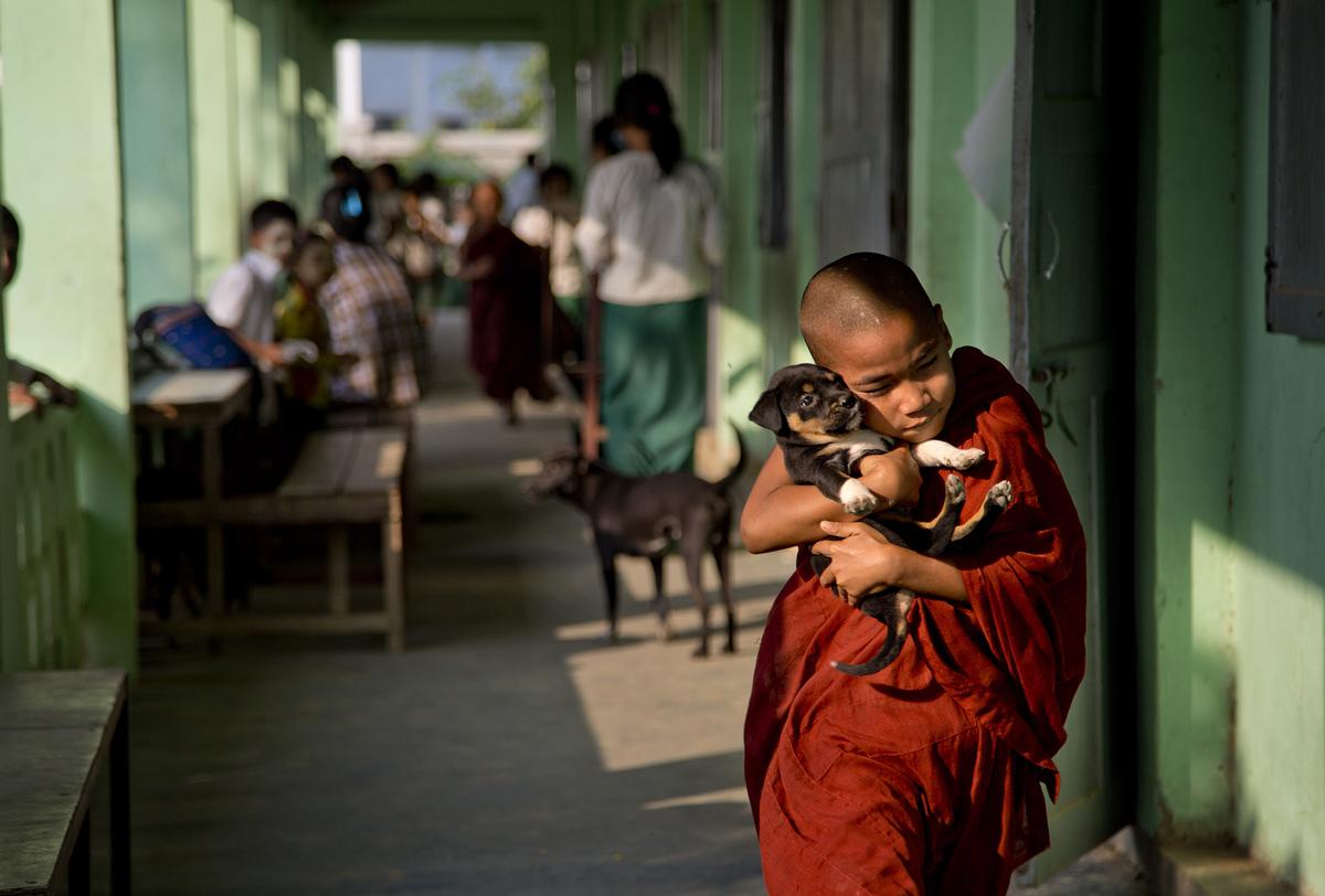 27. Юный буддийский монах с щенком в монастырской школе на окраине Янгона, Бирма, 18 февраля 2016 го