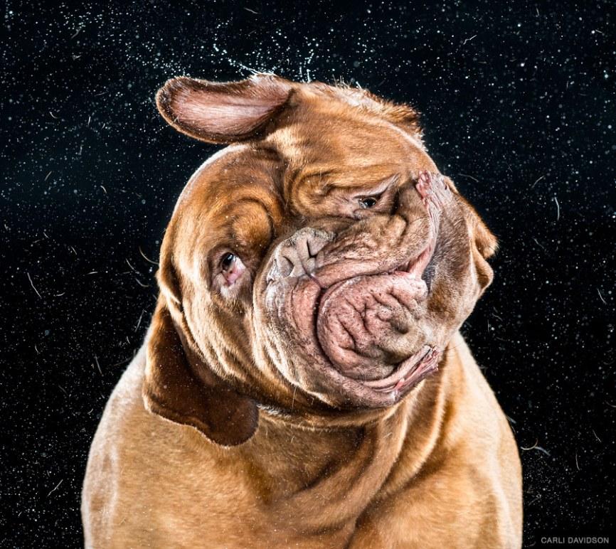 Свои эксперименты с собаками Кэрли Дэвидсон начала в 2011 году, используя технику высокоскорост