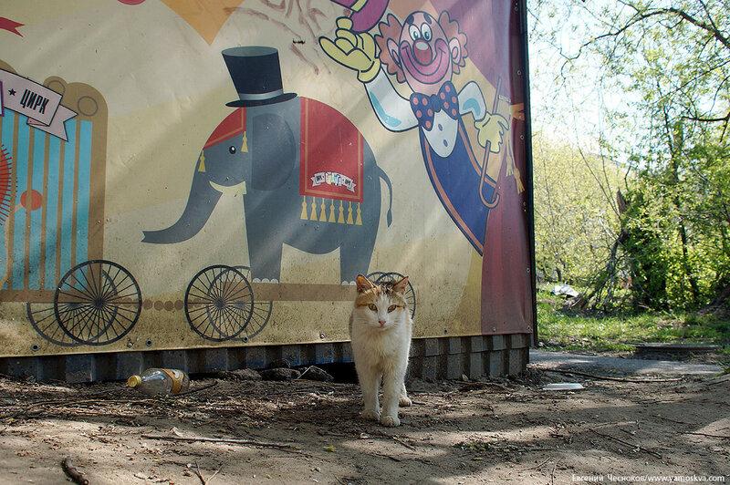 61. Парк Дружбы. Цирк Радуга. 01.05.16.02..jpg