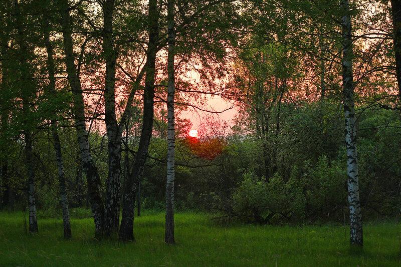 Солнце встаёт над перегоном Осуга - Сычёвка, участок Помельница - Сычёвка