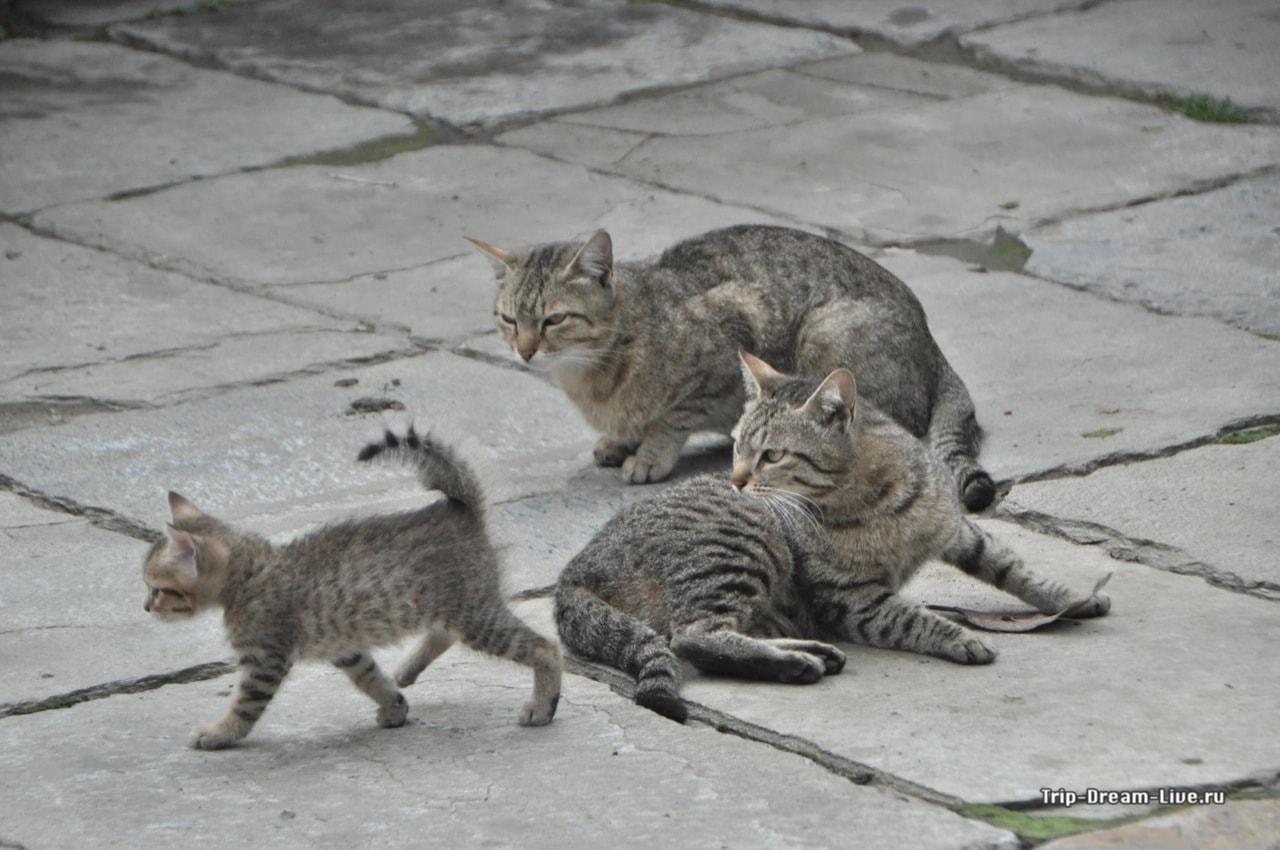 Папа, мама, я - кошачья семья