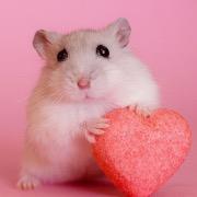 Хомячок с сердечком