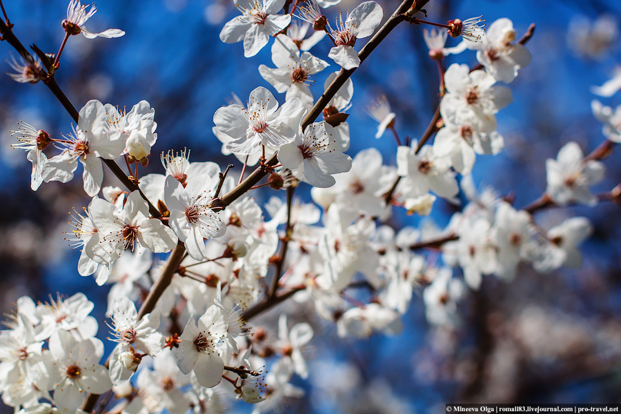 Час цветения