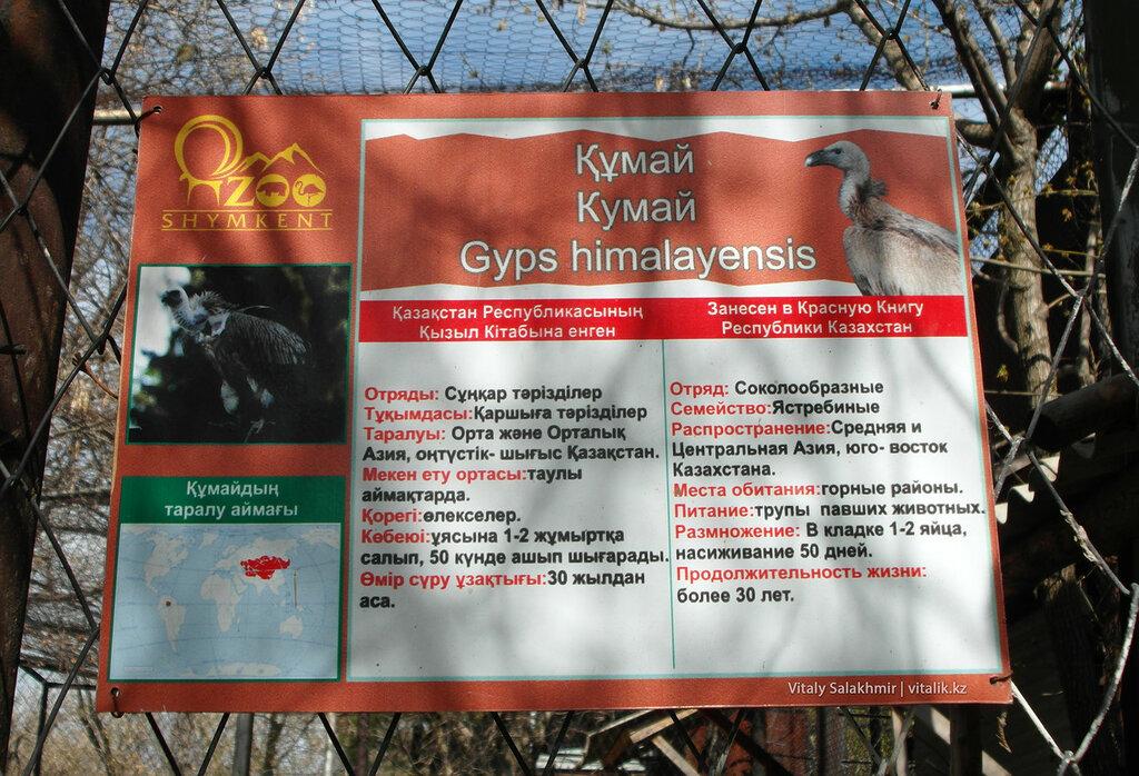 Табличка на клетке кумая, зоопарк Шымкента 2018