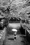 Зонтик от сакуры