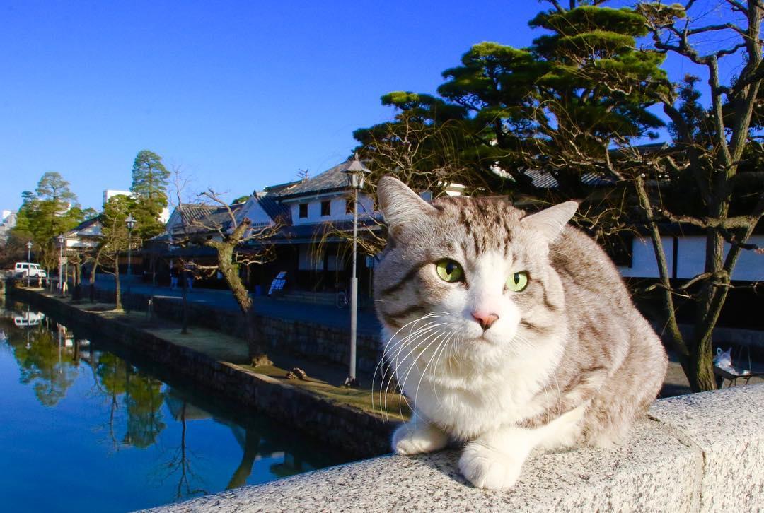 Фотогеничная кошка из Японии Ньянкичи