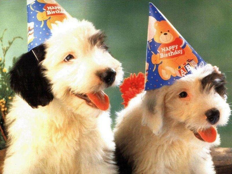 Прикольная открытка с днем рождения сестре с собакой, уголком открытку днем