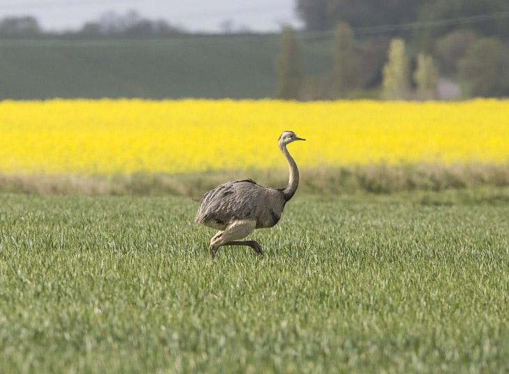 животные самое интересное Фотография В мире фотограф интересное мир