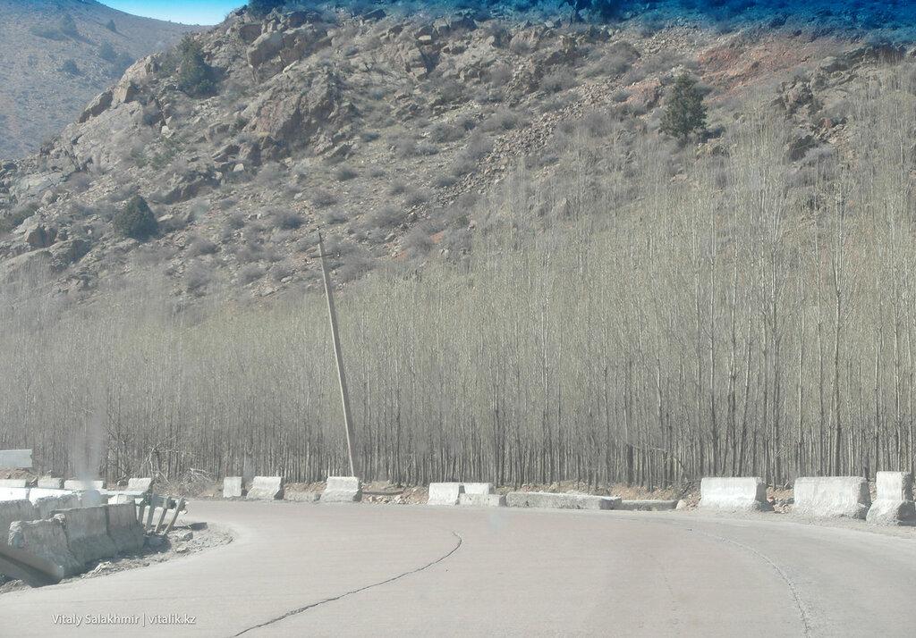Тополя в Узбекистане, дорога Андижан-Ташкент