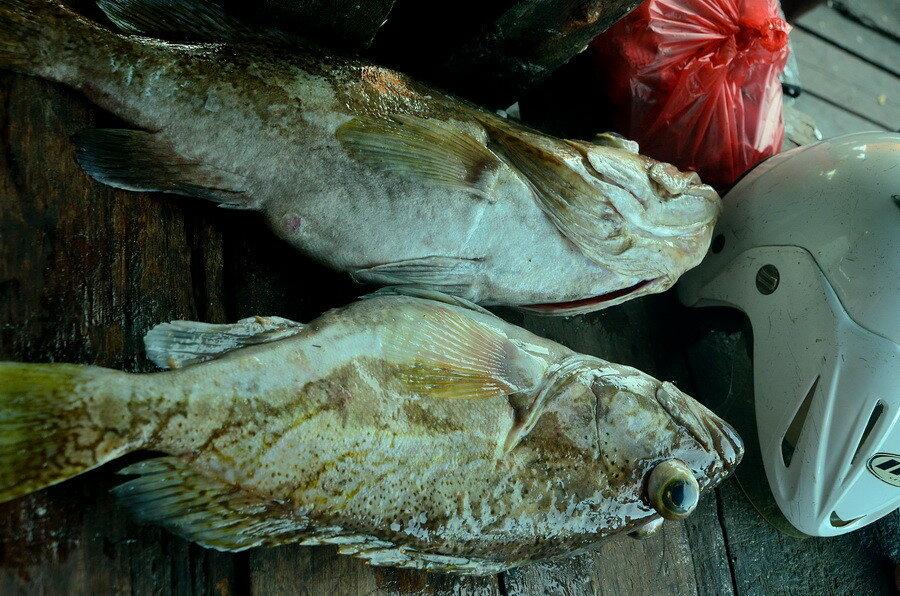 Рыба Город Соронг на Западном Папуа в Индонезии Город Соронг на Западном Папуа в Индонезии 0 1b0fd5 ac79c69e XXL