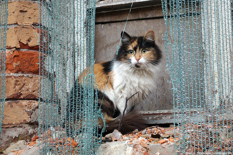 Морозовская больница. 17.04.18.20. котик..jpg