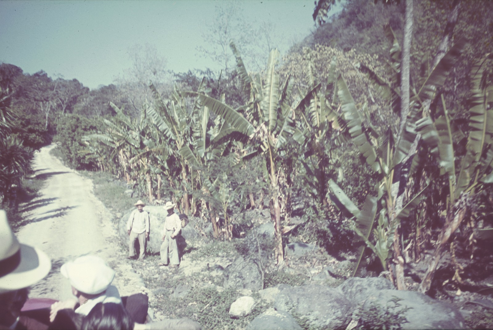 Мексика. Грунтовая дорога