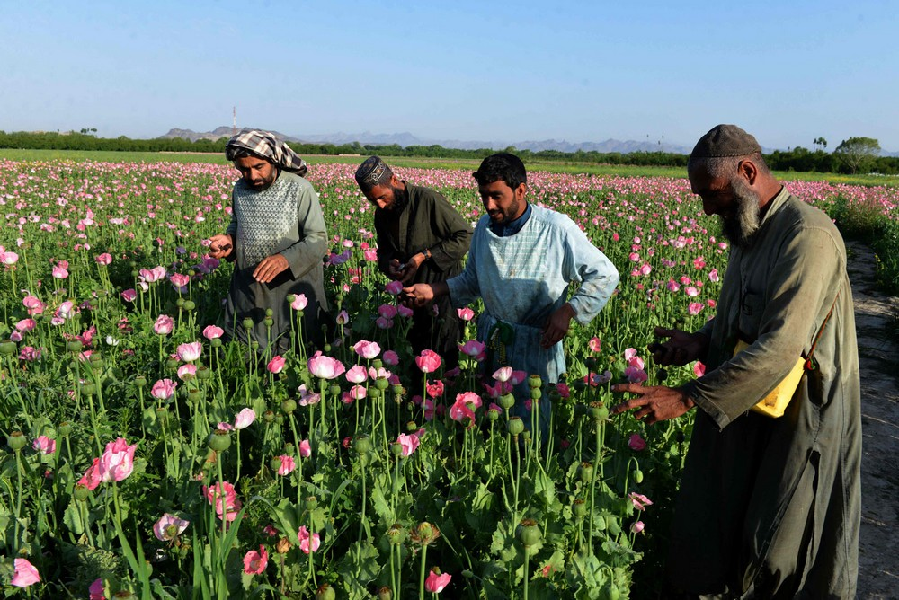 AFGHANISTAN-DRUGS-CRIME-OPIUM