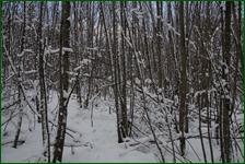http://img-fotki.yandex.ru/get/133748/15842935.41d/0_f185e_f211d471_orig.jpg
