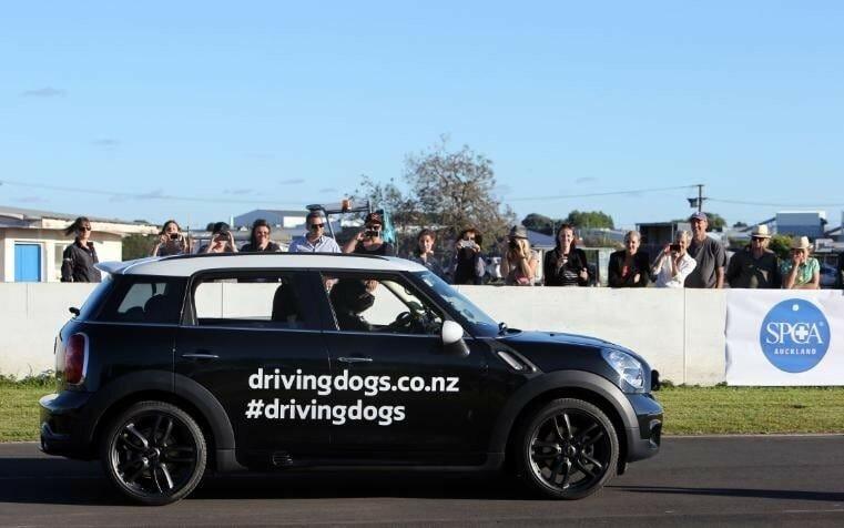 В Новой Зеландии открыли школу вождения для собак