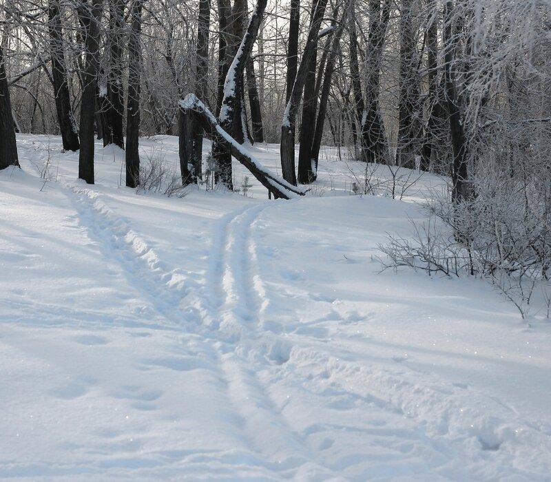 Уральский лес. Мороз и солнце. Окрестности Кировграда