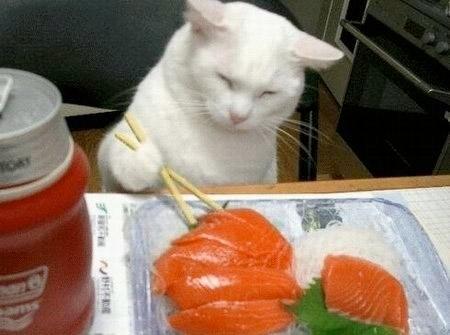 эти продукты вредны для кошки