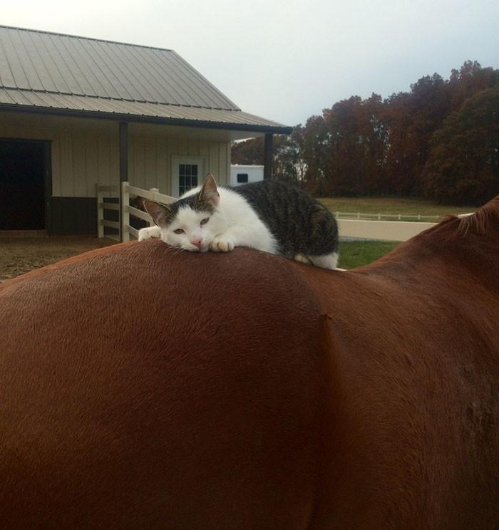 кот и лошадь друзья