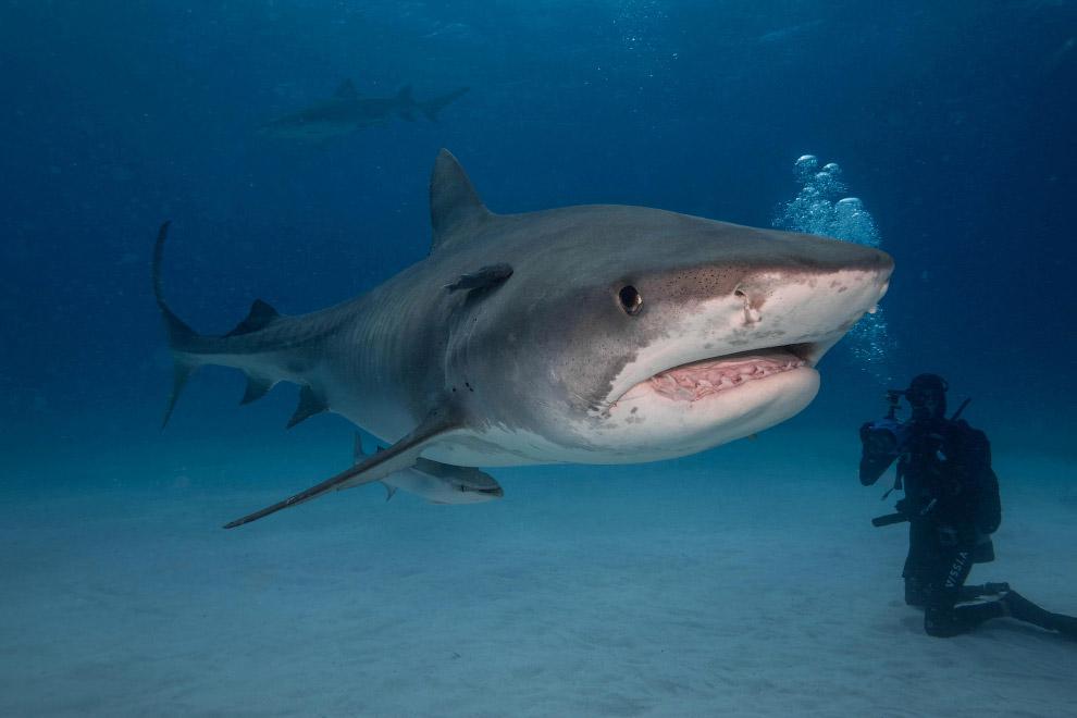 5. Хотя если бы акуле было нужно, то шансов спастись не было бы вообще никаких. Эта машина для