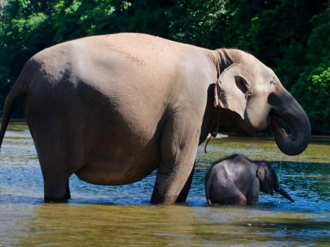 20очаровательных животных винтересном положении
