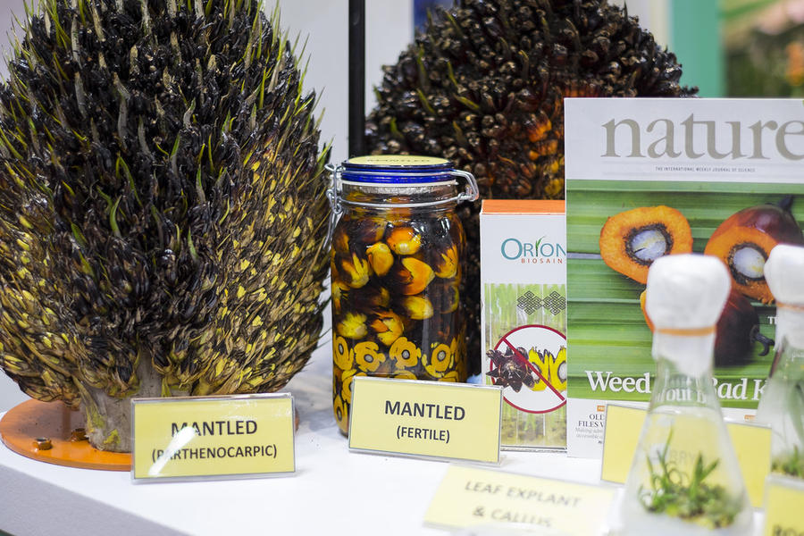 О вреде пальмового масла (12 фото)