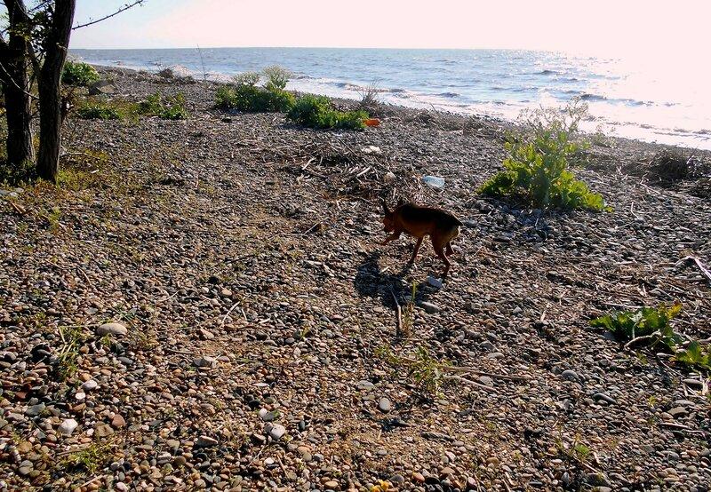 У моря, пёсик пробежал ... DSCN5406.JPG