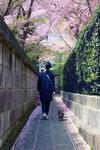 Пройтись по сакуре