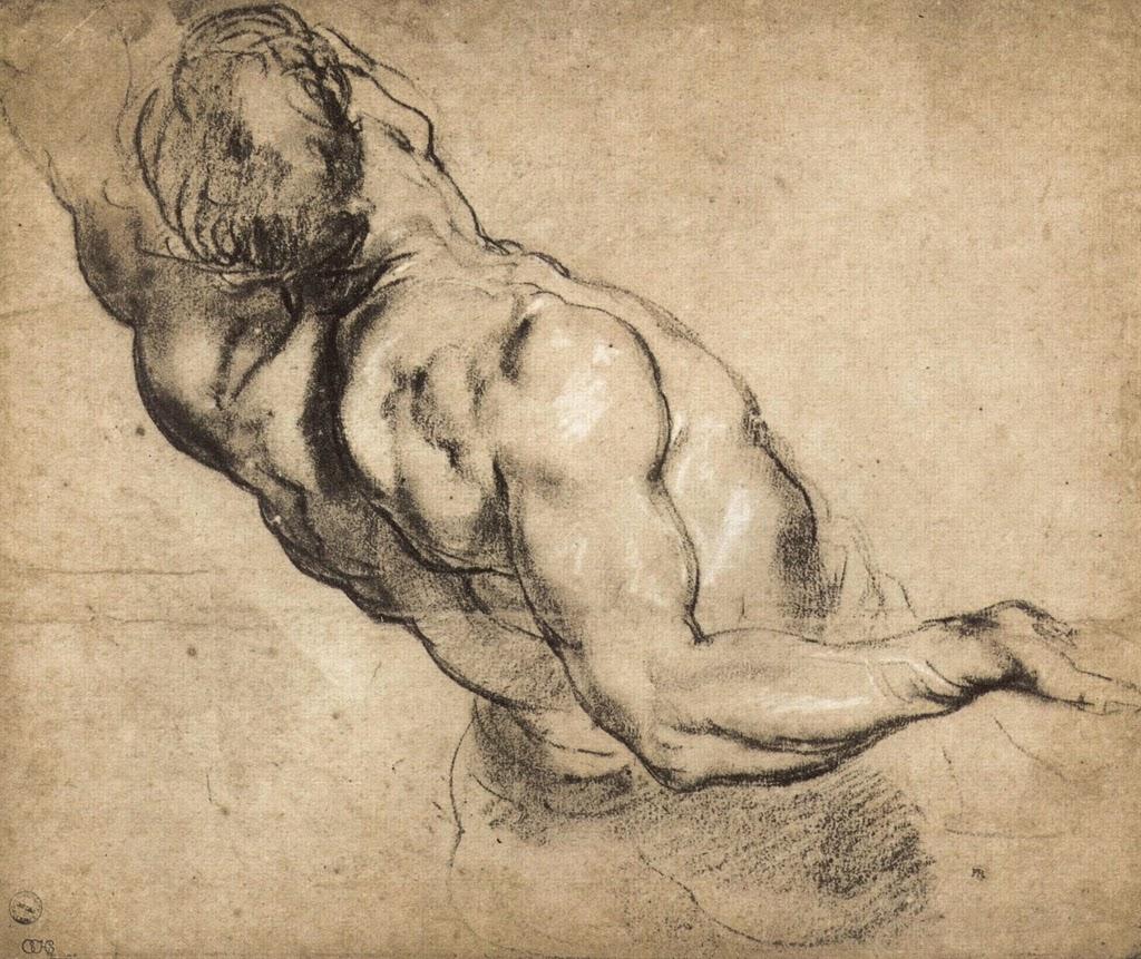 Study of man's torso by Rubens.jpg