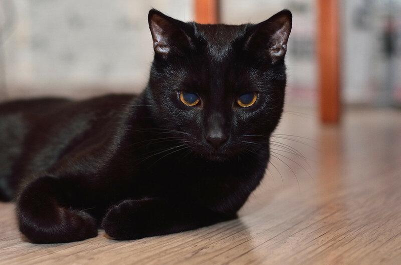 Кот не может пописать что делать в домашних условиях, первая помощь 66