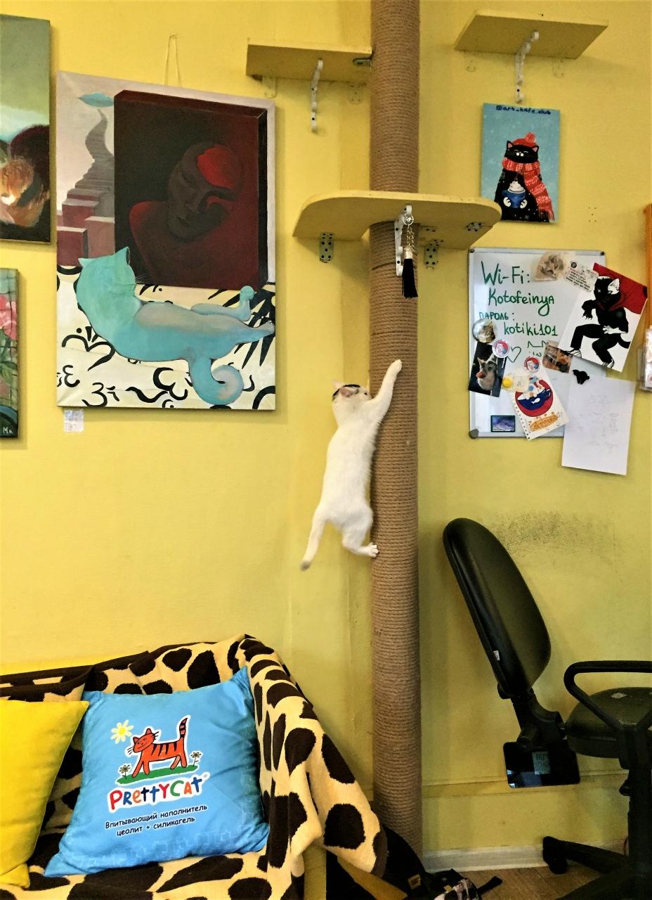 Котики из котофейни