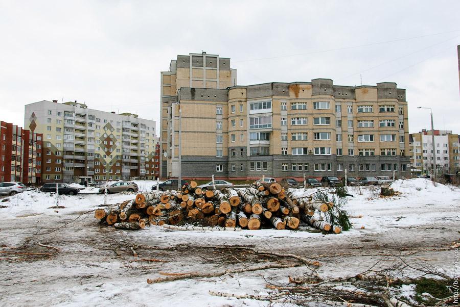лежат вырубленные деревья