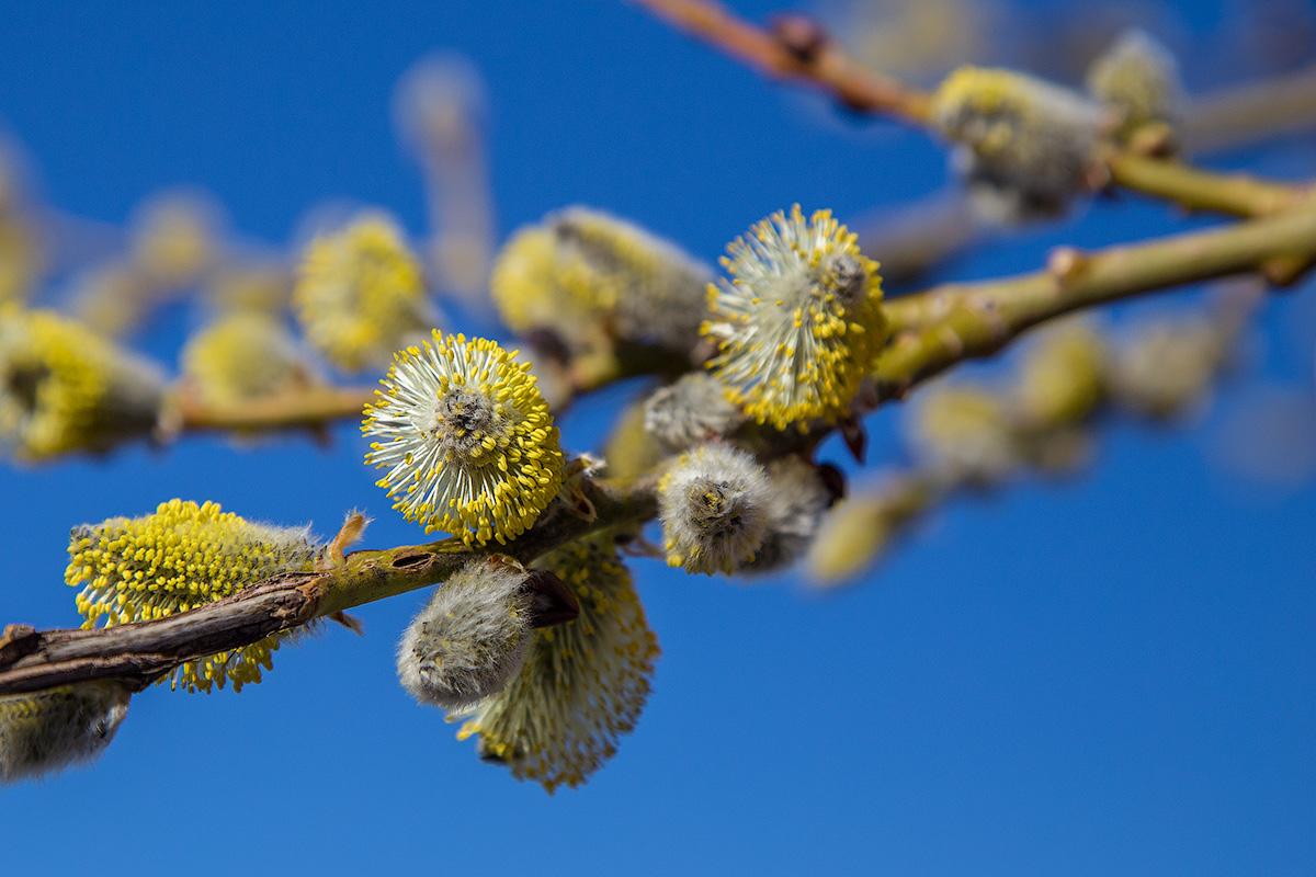 А весна уже по-настоящему пришла в горы!