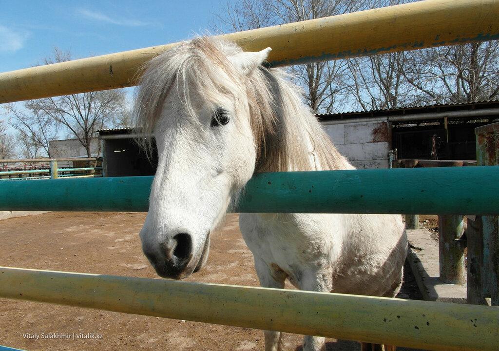 Лошадь в зоопарке Шымкента