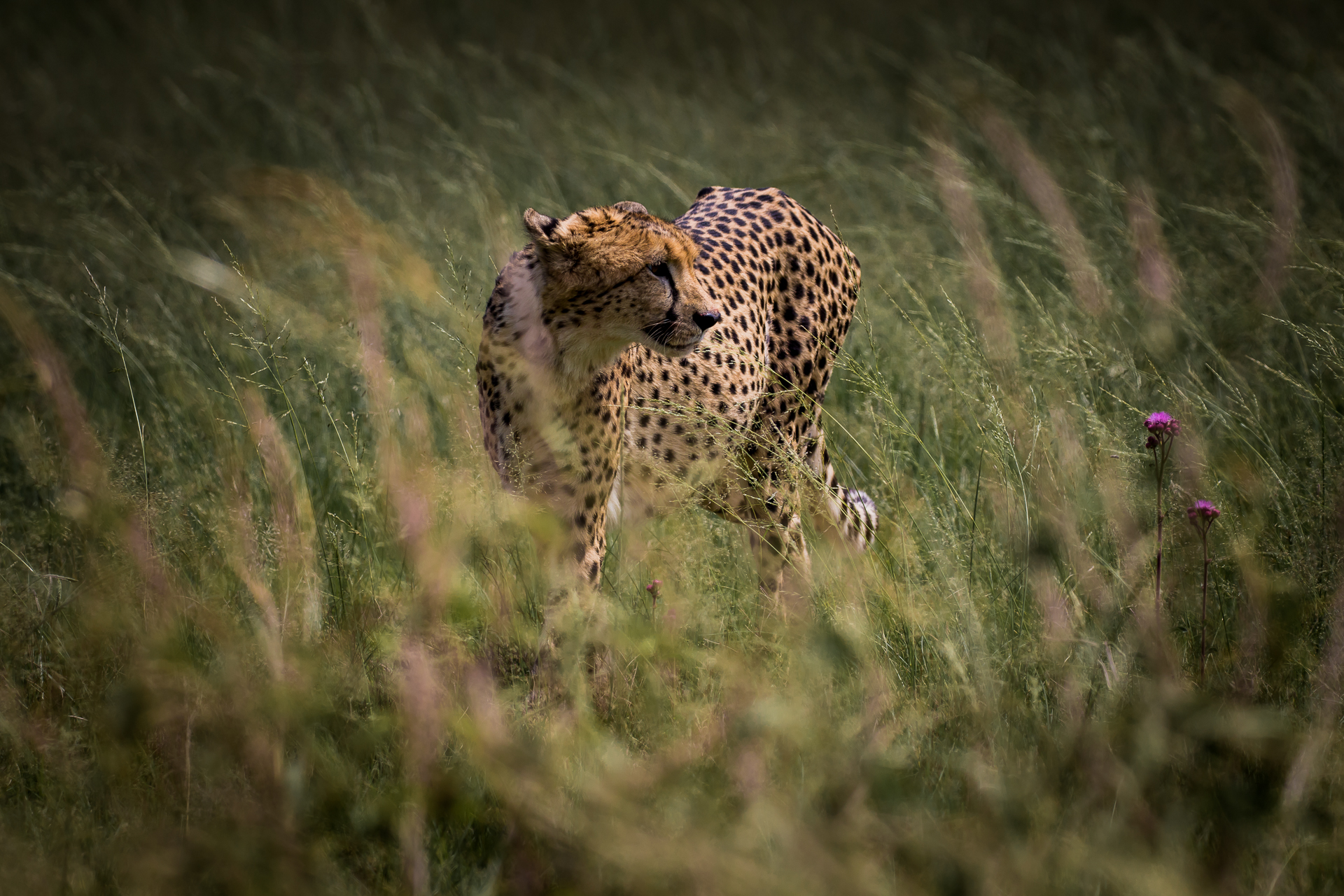 Amazing Images of South Africa's Wildlife