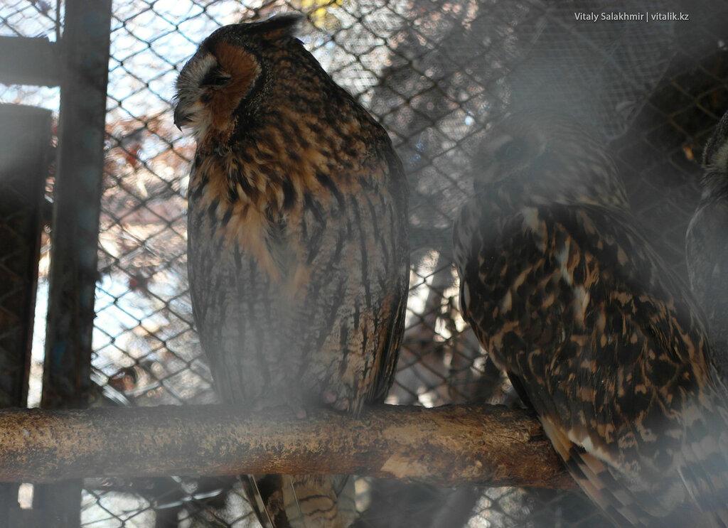Совы в зоопарке Шымкента