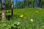 IMG_6063.JPG На лилейниковой поляне