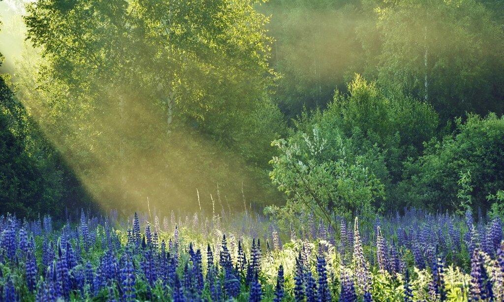 ...Макушка лета. Солнечные блики,Чуть-чуть ленясь, наряд веселый шьют, И тянутся сиреневые пики  В заманчивый заоблачный уют...            Нина Таловская